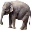 elephant-thmnl.jpg